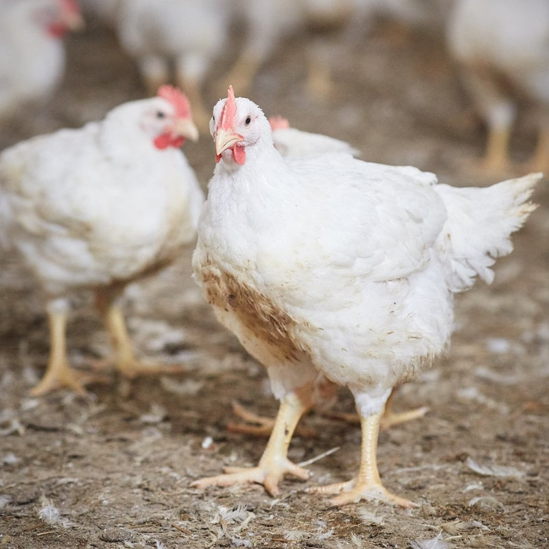 PoultryPlan   ERP Software   Turns your data into growth!