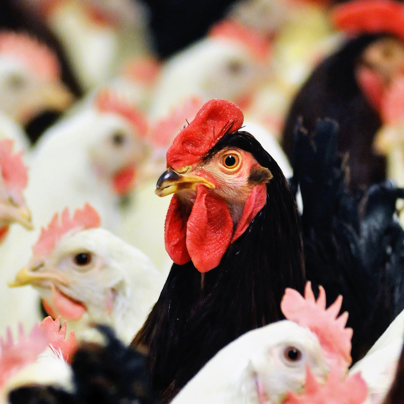 PoultryPlan | ERP Software | Turns your data into growth!